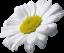 Аватар пользователя iraptashnikova