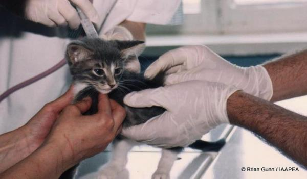 cat-animal-testing-picture.jpg