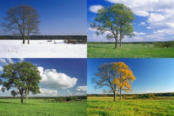 Картинки природы зимой летом весной осенью